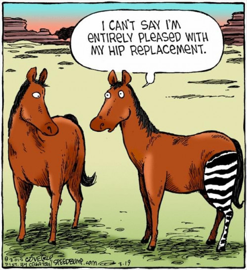 HorseHipReplacement.jpg